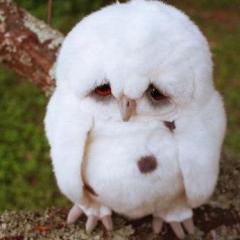 w1se_owl