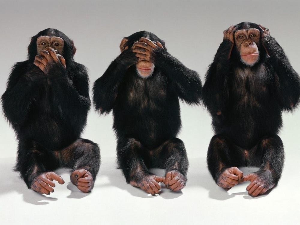 monkeys_blind_deaf_dumb_improvisation_39981_1280x960.jpg