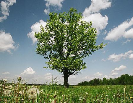oak.jpeg